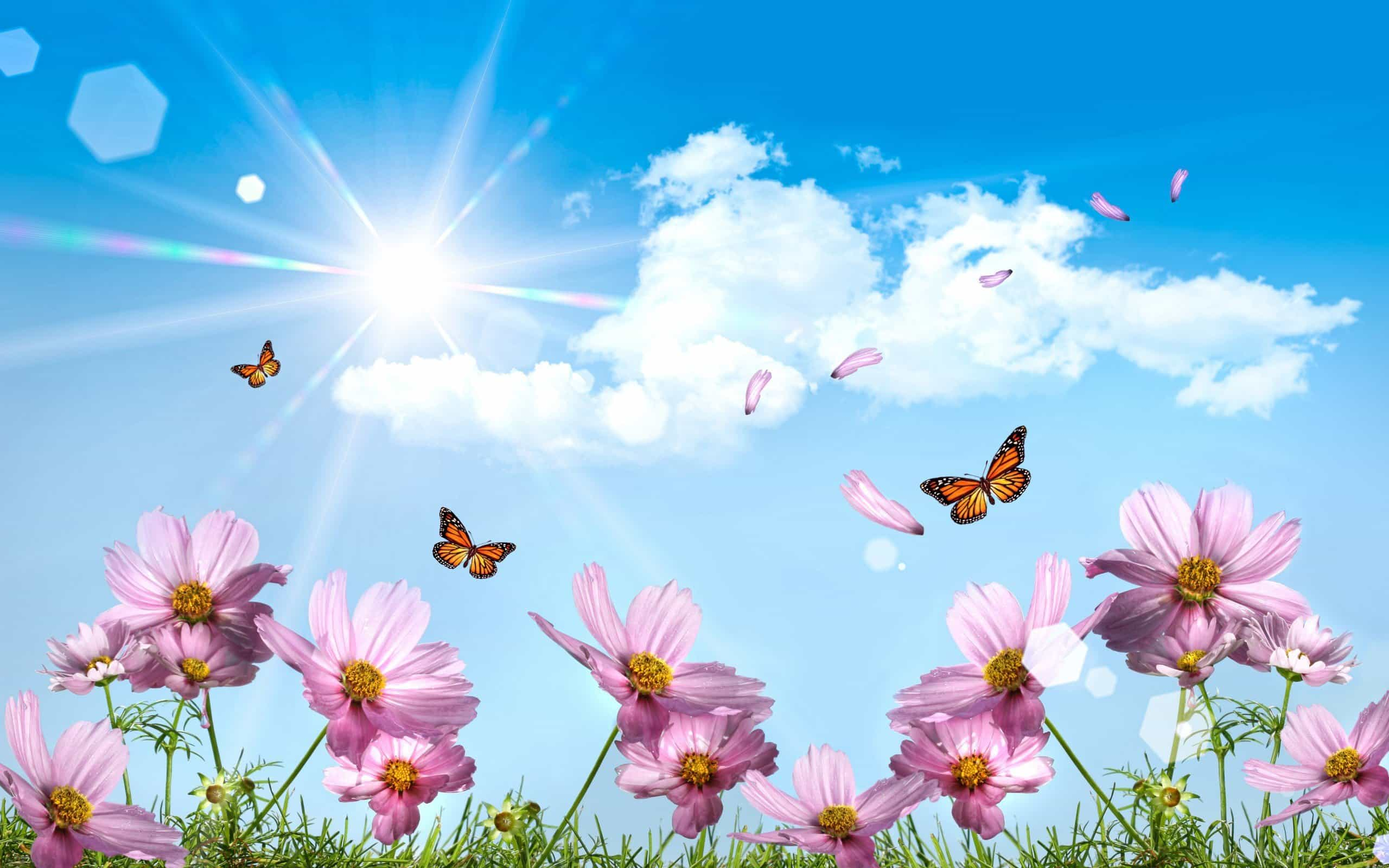 photoshop_butterflies_and_petals_083360_